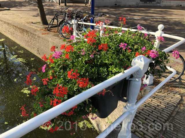 街中にあふれる花