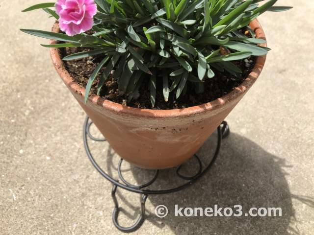 別の鉢の使用例
