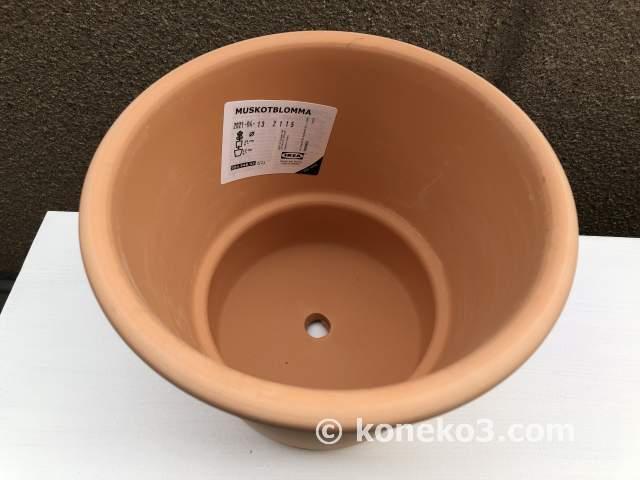 7号鉢相当サイズ